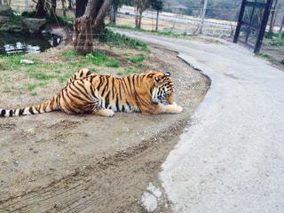 動物園の写真・画像素材[435629]