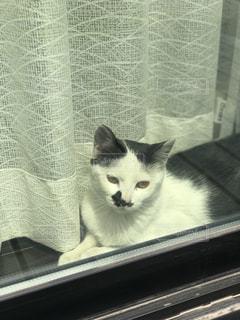 子猫 日向ぼっこの写真・画像素材[436103]