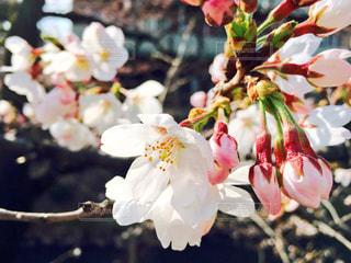 春の写真・画像素材[435594]