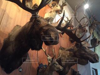 鹿の写真・画像素材[477306]