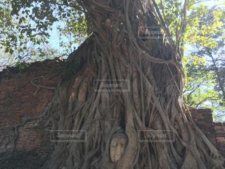 Thailandの写真・画像素材[437048]