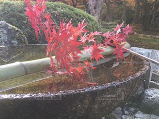 No.437064 京都