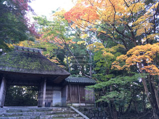 紅葉 - No.437100