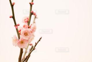 花の写真・画像素材[439061]