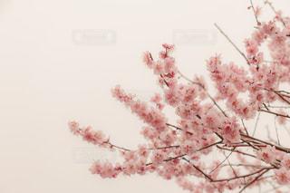 花の写真・画像素材[439438]