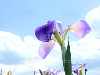 flowerの写真・画像素材[501613]