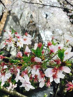 春の写真・画像素材[436622]