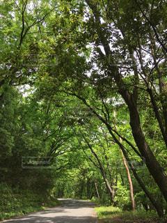 森林の写真・画像素材[464305]