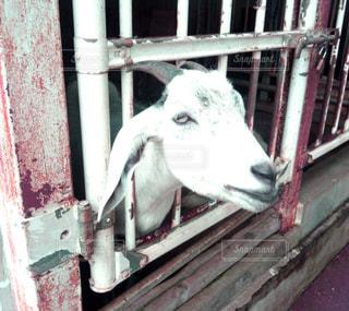動物の写真・画像素材[437201]