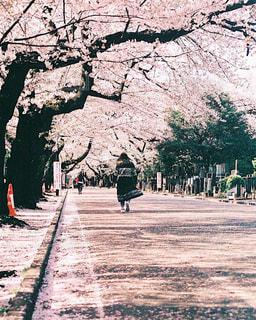 春 - No.437412
