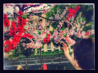 春の写真・画像素材[445883]