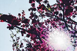 春 - No.445884