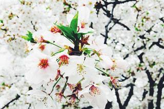 春 - No.445886