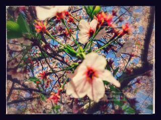 春の写真・画像素材[453872]