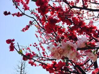 春の写真・画像素材[453877]