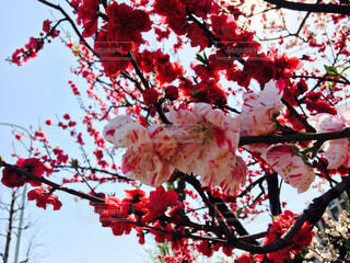 春 - No.453878