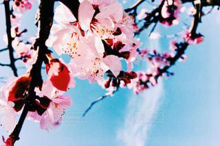 春 - No.453880