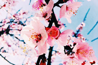 春の写真・画像素材[453881]