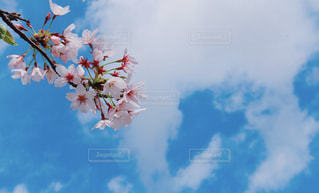 風景の写真・画像素材[437432]