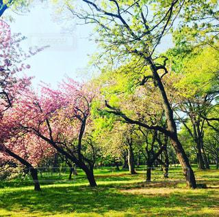 春の公園の写真・画像素材[2071523]