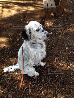 犬の写真・画像素材[1093591]