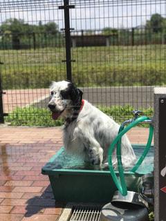 犬の写真・画像素材[1093764]