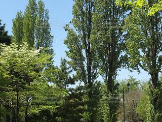 公園の写真・画像素材[455786]