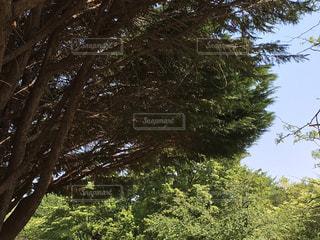 公園の写真・画像素材[455788]
