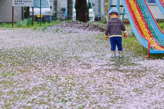 桜の散る頃の写真・画像素材[440271]