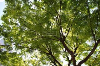 緑の写真・画像素材[447130]