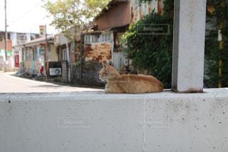 猫の写真・画像素材[523342]