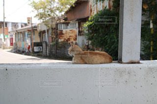 猫 - No.523342