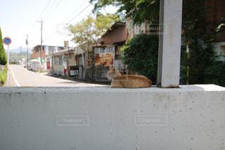 猫の写真・画像素材[523344]