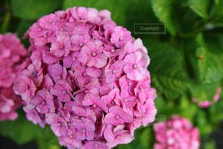 花の写真・画像素材[546000]