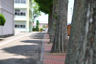 木の写真・画像素材[546009]