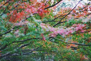 季節の変わり目の写真・画像素材[898639]