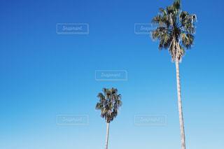 澄んだ空の写真・画像素材[900345]