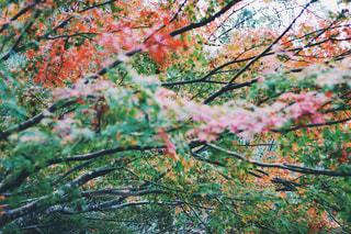 森の中で - No.1008073