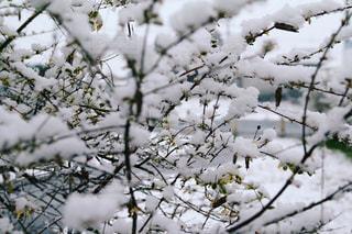 雪の積もった木々の写真・画像素材[1008076]
