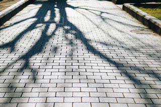 散歩しながらの写真・画像素材[1008081]