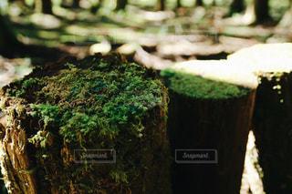 山奥にての写真・画像素材[1008089]