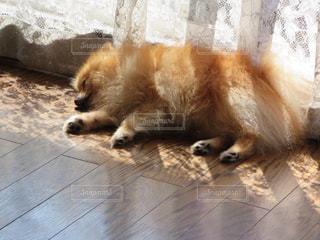 犬の写真・画像素材[683684]