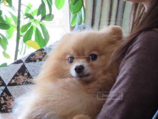 犬の写真・画像素材[683685]