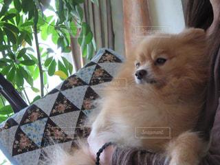 犬の写真・画像素材[683686]