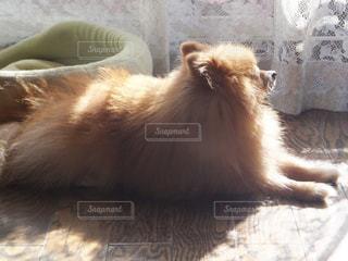 犬の写真・画像素材[683689]