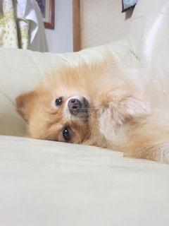 犬の写真・画像素材[683721]