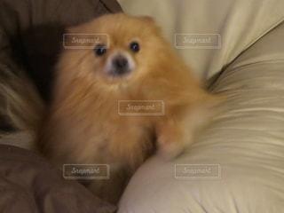 犬 - No.683722