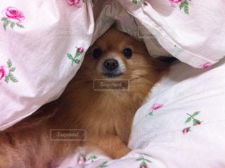 犬の写真・画像素材[683724]