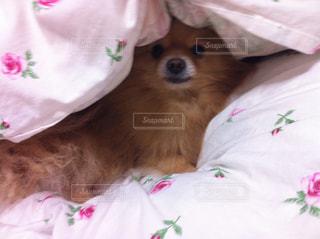 犬の写真・画像素材[683725]