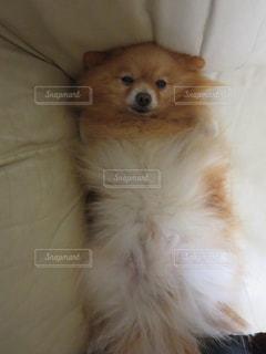 犬の写真・画像素材[683726]